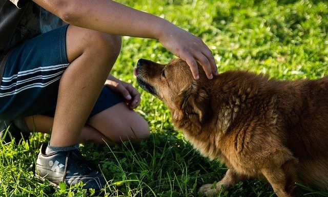 Pet Owners Guide :HOW To Stop Your Dog From Biting