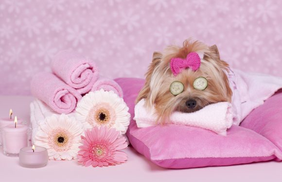 Best Pet Grooming Salon Sturbridge, Massachusetts Has To Offer