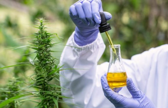 What Is The Impact Of Cbd On You According To Dmagazine